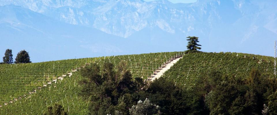Winery, Italy holiday, Italy tour